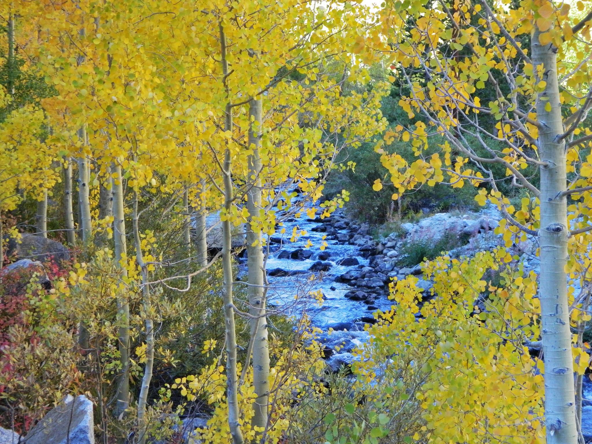 Bishop California Fall colors